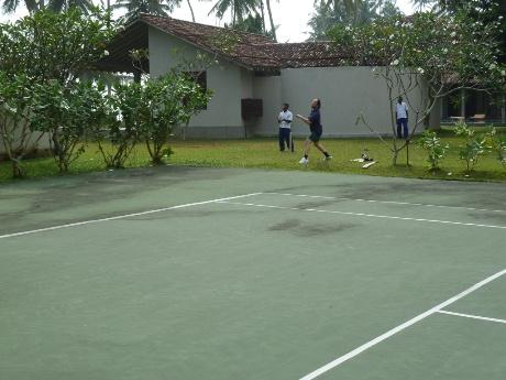 Frangipani cricket