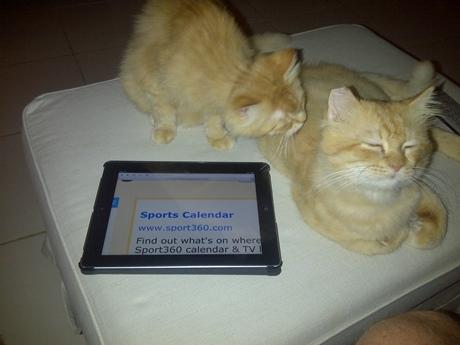 As a cat, Jaffa has no money with which to place a bet