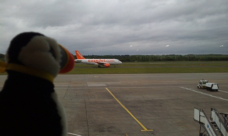 Mr Puffin considers flying under his own steam