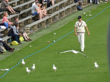 One of these white creatures is not a seagull