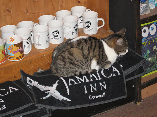Unarguably a cat at Jamaica Inn